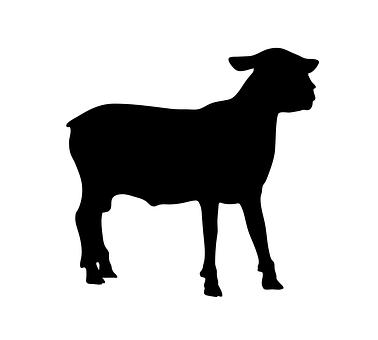 Sheep, Animal, Standing, Farm, Lamb, Nature, Domestic