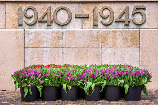 Second World War, Remembrance Day, Tulips, War