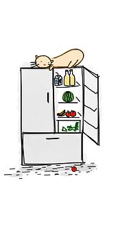 Cat, Fridge, Food, Drink, Refrigerator