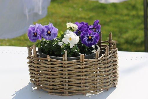 Flowers, Garden, Nature, Colors, Plant