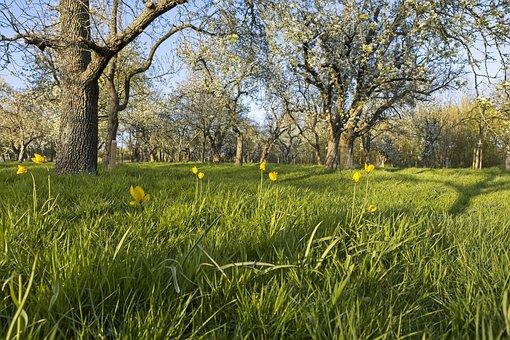 Park, Evening Sun, Landscape, Nature, Outdoor, Spring