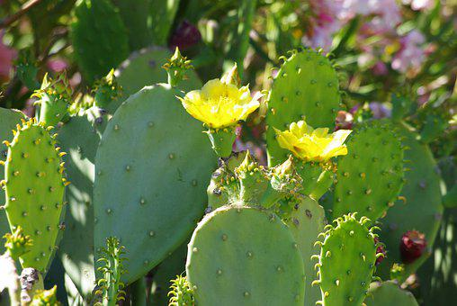 Cactus, Flower, Green, Yellow, Plant, Outside