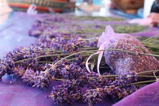 Lavender, Violet, Herbs, Nature, Plant, Garden