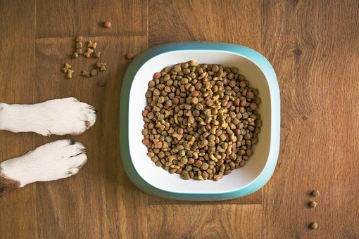 Dog Food, Dog Bowl, Dog Kibble, Dry Dog Food, Paws