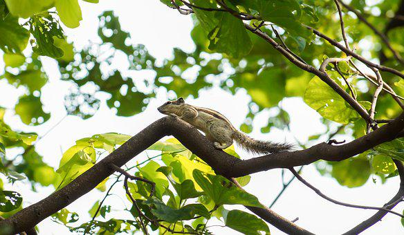 Squirrel, Nature, Green, Tree, Bark