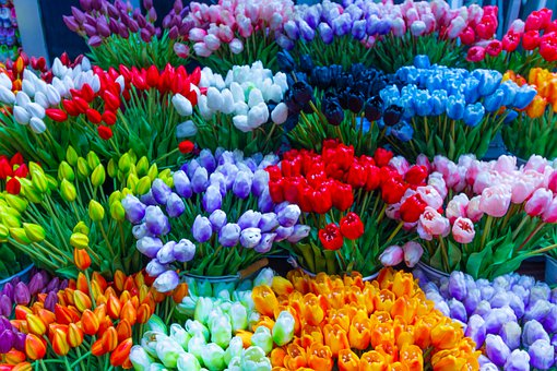 Flower, Amsterdam, Bloom, Blossom, Plant