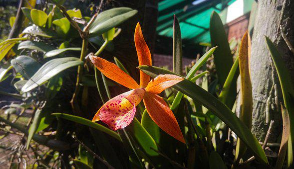 Nature, Flora, Flower, Orchid, Tree