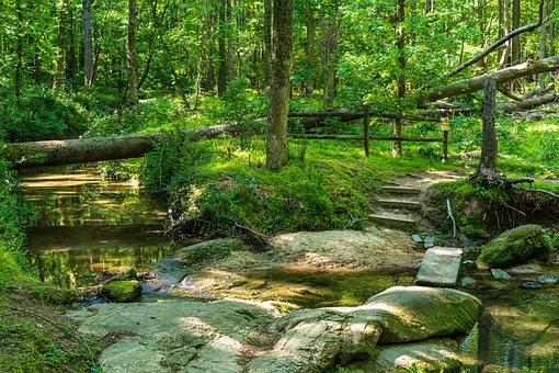 Forest Trail, Stream Crossing, Rock Path, Rock Bridge