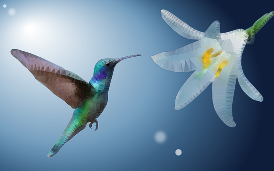 Hummingbird, Ave, Flower, Low Poly, Exotic, Plumage