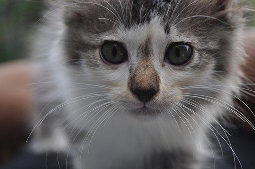 Cat, Cute, Kitten, Pet, Kitty, Animal, Feline, Adorable