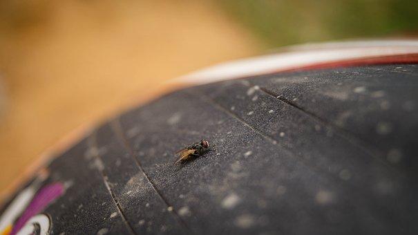 Animal, Background, Beautiful, Black, Bug, Close