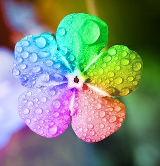 Rainbow, Flower, Raindrops, Colorful, Floral, Chromatic