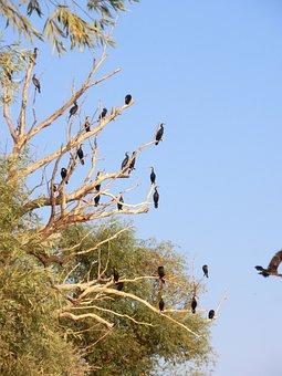 Birds, Danube, Black Bird, Bird, Birds On The Tree