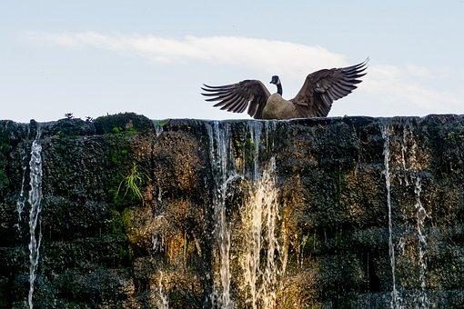 Goose On A Dam, Triumphant Goose