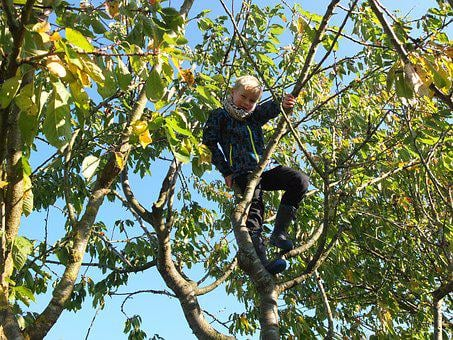 Child In The Tree, Climb, Childhood, Nature, Play