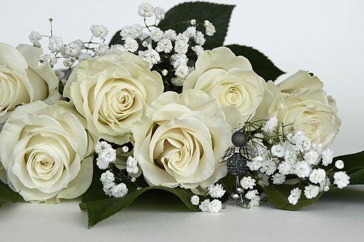 Roses, Rose Flower, Flowers, White, Angel, Gypsophila