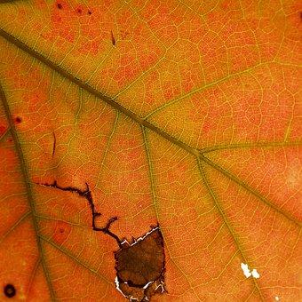 Leaves, Leaf, Braid, Indian Summer, Autumn