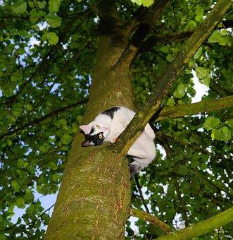 Cat, Tree, Climb, Young Cat, Pet, Nature