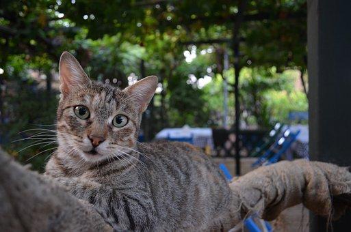 Cat, Greek, Tavern, Greece, Cats, Kitty, Holiday