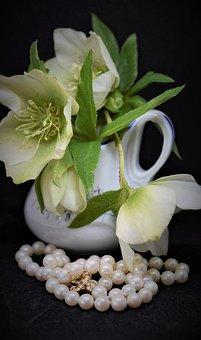Christmas Rose, Anemone Blanda, Flower