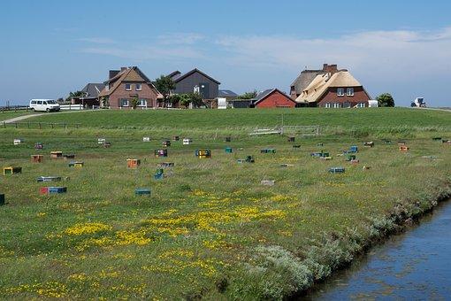 Hallig Hooge, Bees, Hallig, Summer, Salt Meadow
