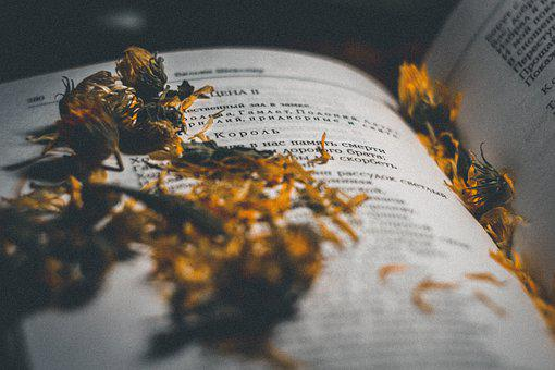 Yellow, Word, Book, Flower, Home, Literature, Old