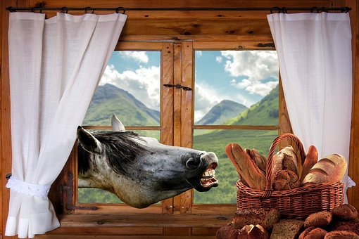 Mold, Horse, Eat, Funny, Window, Food, Fun, Breadbasket
