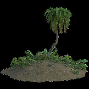 Tropical, Sand, 3d, Tree, Palm, Plants, Flowers, Nature