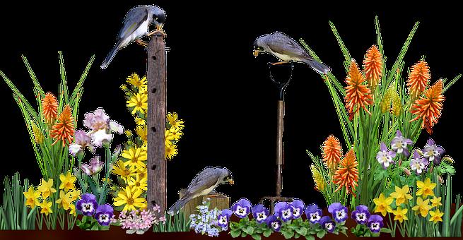 Scene, Garden, Flowers, Plants, Birds
