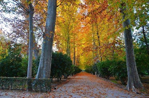 Aranjuez, Garden, Park, Foliage, Nature
