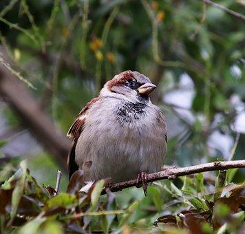 Bird, Sparrow, Wildlife, Perched, Tree, Garden, Nature