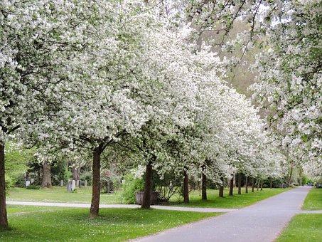 Flourishing Tree, Ornamental Apple Tree