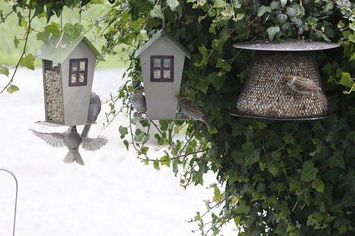Sparrow, Sperling, Feeding, Food, Hunger, Plumage