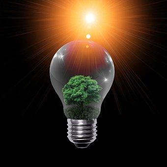 Lamp, Orange Light, Bulb, Nature, Tree