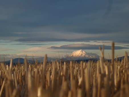 Mt Hood, California, Mountain, Snow, Grass, Landscape