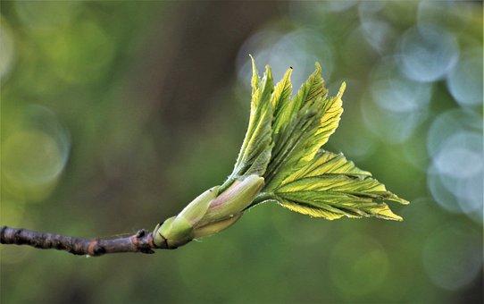 Spring, Leaf, Fresh, Rostock, Bokeh