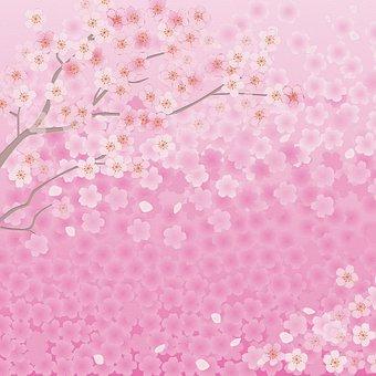 Sakura Florals, Tree, Branch, Spring, Pink, Nature