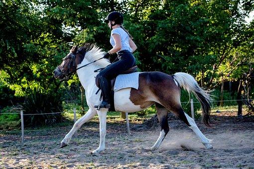 Horse, Rider, Animal, Nature, Animals