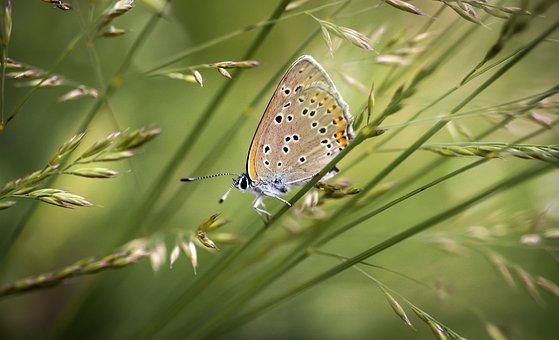 Butterfly, Butterflies, Macro, Beautiful, Color, Meadow