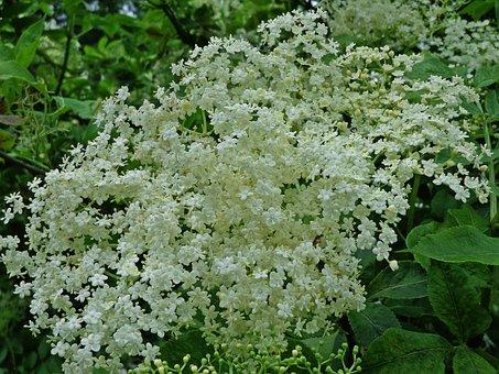 Black, Flowers, Nature, Flower, Spring, Blooming