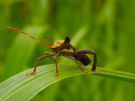 Bug, Insect, Green, Nature, Beetle, Bugs, Wings