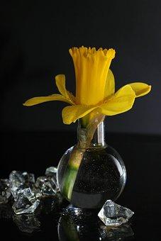Daffodil, Yellow, Daffodils, Easter