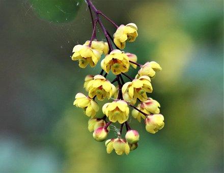 Bush, Dashing, Sprig, Flowers, Flowering, Nature