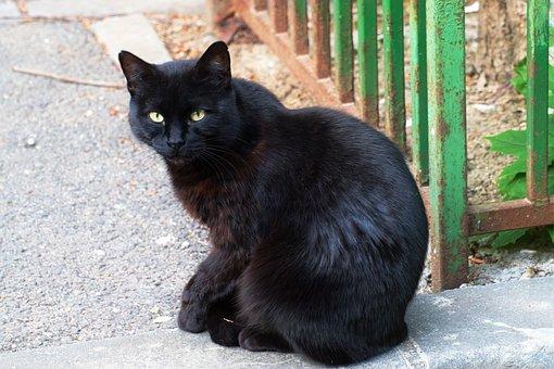 Cat, Pet, Feline, Fur, Black, Sitting, Asphalt