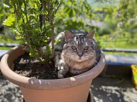 Cat, Garden, Animal, Pet, Relaxing