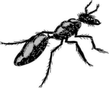 Ant, Insect, Segmented, Body, Nature, Bug, Pest, Black