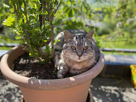 Cat, Garden, Animal, Pet, Relaxing, Chill
