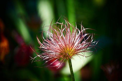 Flower, Flowers, Summer, Spring, Nature