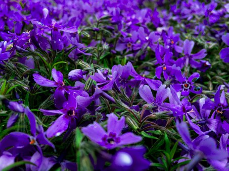 Nature, Flowers, Flower, Plant, Bloom, Blossom, Spring