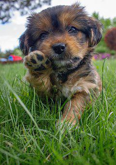 Dog, Puppy, Brown, Animals, Nice, Young, Domesticated